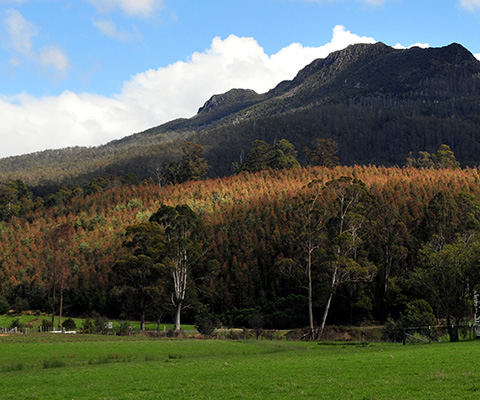 Quamby Bluff, Tasmania. Photo: Peripitus